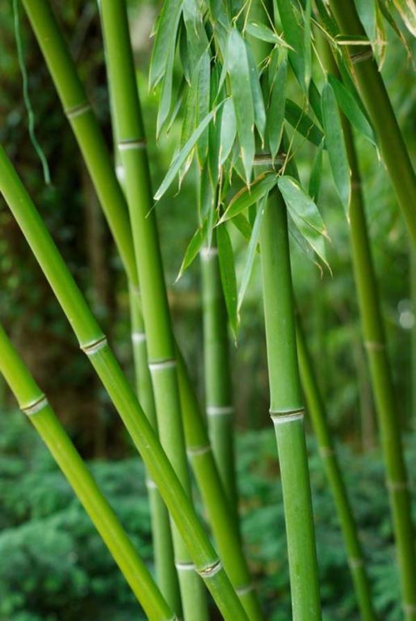 Bambus   Sandsun  2007  iStockphoto