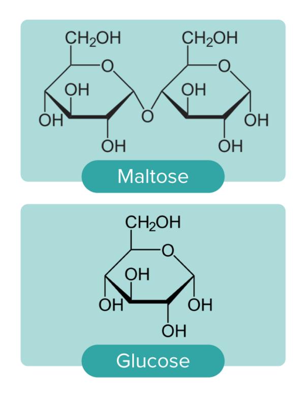 Maltose glucose